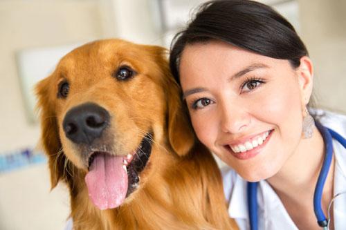 veterinarian-500